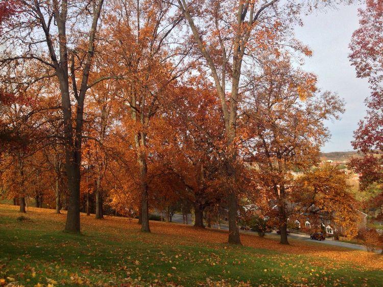Autumn above the town Autumn Colors Autumn EyeEm Best Shots - Autumn / Fall Trees