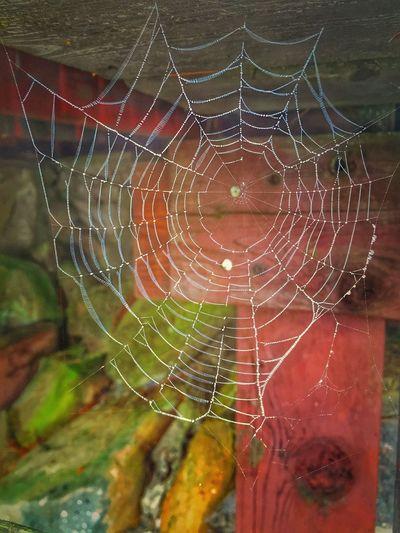 Cobweb Down By