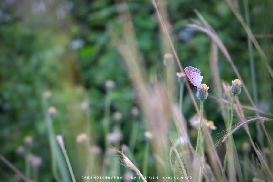 """สิ่ ง เ ล็ ก ๆ ที่ เ รี ย ก ว่ า """" ผี เ สื้ อ """" Relaxing Taking Photos Enjoying Life Fujifilm X-m1 Walking Around Open Edit EyeEm Best Shots Nature Flowers Animal"""