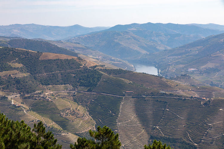 Vineyards on hills around River Douro in Portugal. , the oldest wine region in the world Beauty In Nature Day Environment High Angle View Idyllic Land Landscape Mountain Mountain Range Nature No People Non-urban Scene Outdoors Plant Scenics - Nature Sky Tranquil Scene Tranquility Tree Water