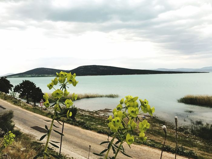 Artkadraj Beysehir Sky Cloud - Sky Water Plant Tranquility Beauty In Nature Scenics - Nature Tranquil Scene Nature Tree Day Growth No People Land Lake Landscape Environment Outdoors