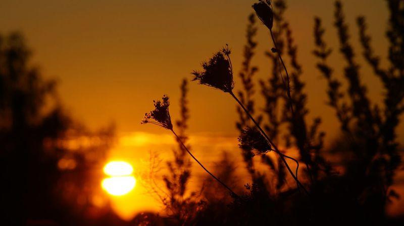 Today's shot. Walking Around Grasses The Sunset