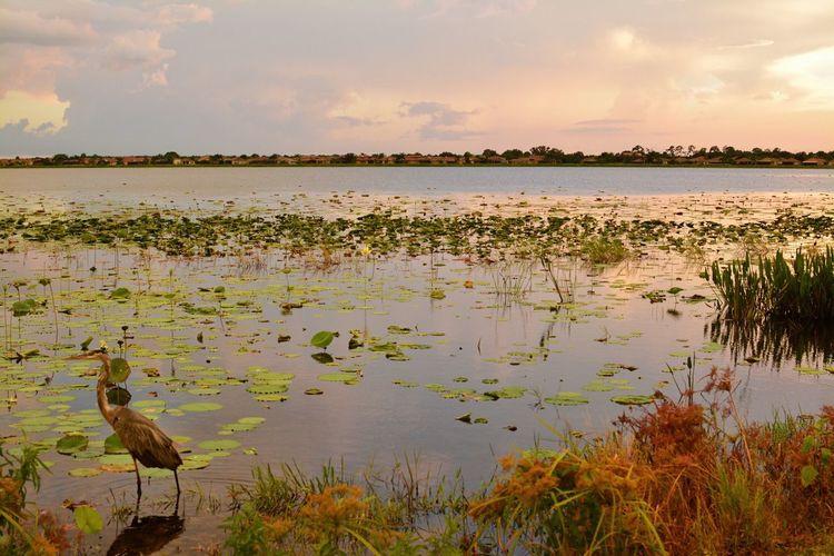 Bird perching on lakeshore during sunset