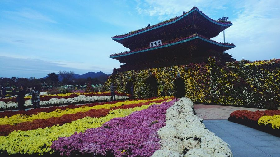 Theme Park Flower Festival Flower HouseMan Made Landscape Sky Multi Colored Agriculture No People Day Fragility Outdoors Nature Beauty In Nature
