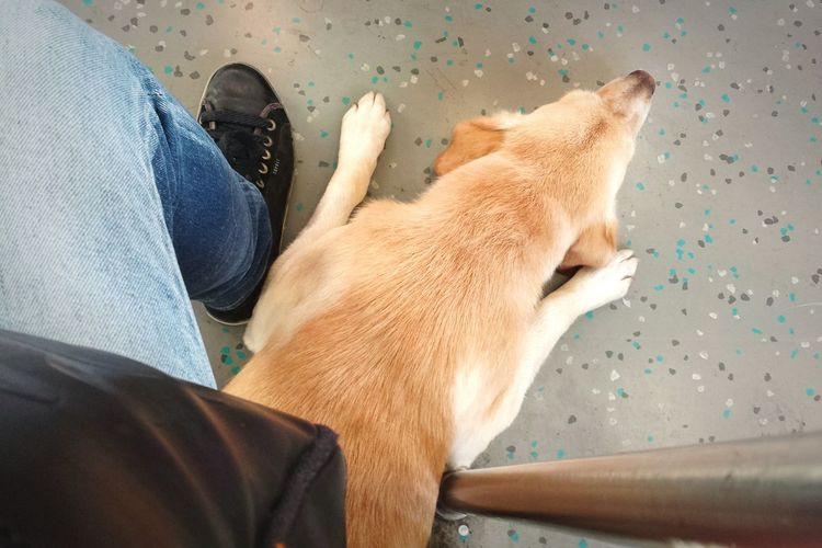 Check This Out - welcome to Berlin . Getting Creative Cute Dog under my Feet in the Sbahn . Topdown Dogs EyeEm Animal Lover
