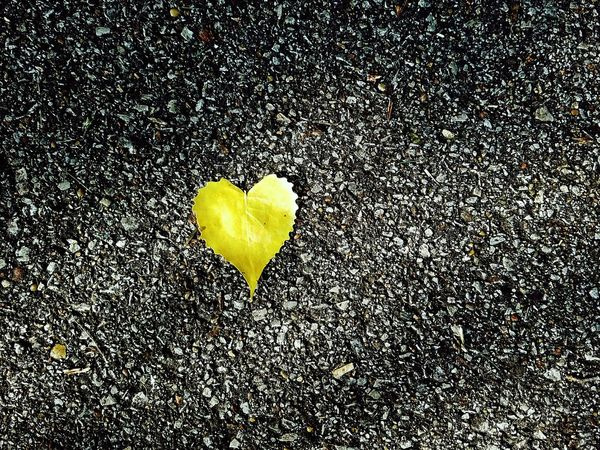All we need is love. Heart Shape Full Frame Love EyeEm EyeEm Best Shots EyeEm Selects Yellow Nature Leaf