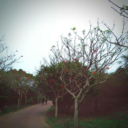 """""""这条路啊,我们一起走了这么久,花儿红了一次又一次,头发白了一根又一根……"""" 有情人 情侣 故事 路"""