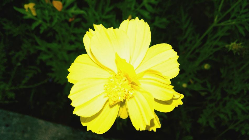 Flower Yellow Flower Beautiful