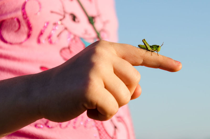 Midsection of girl holding insect on finger against sky