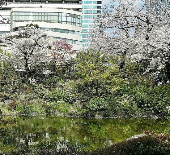 Trees Shrubs Buildings Reflections Mori Gardens Spring 2015 Sakura Tokyo Japan Travel Photography
