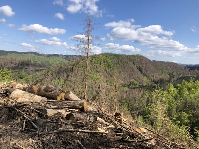 Wooden log on field against sky