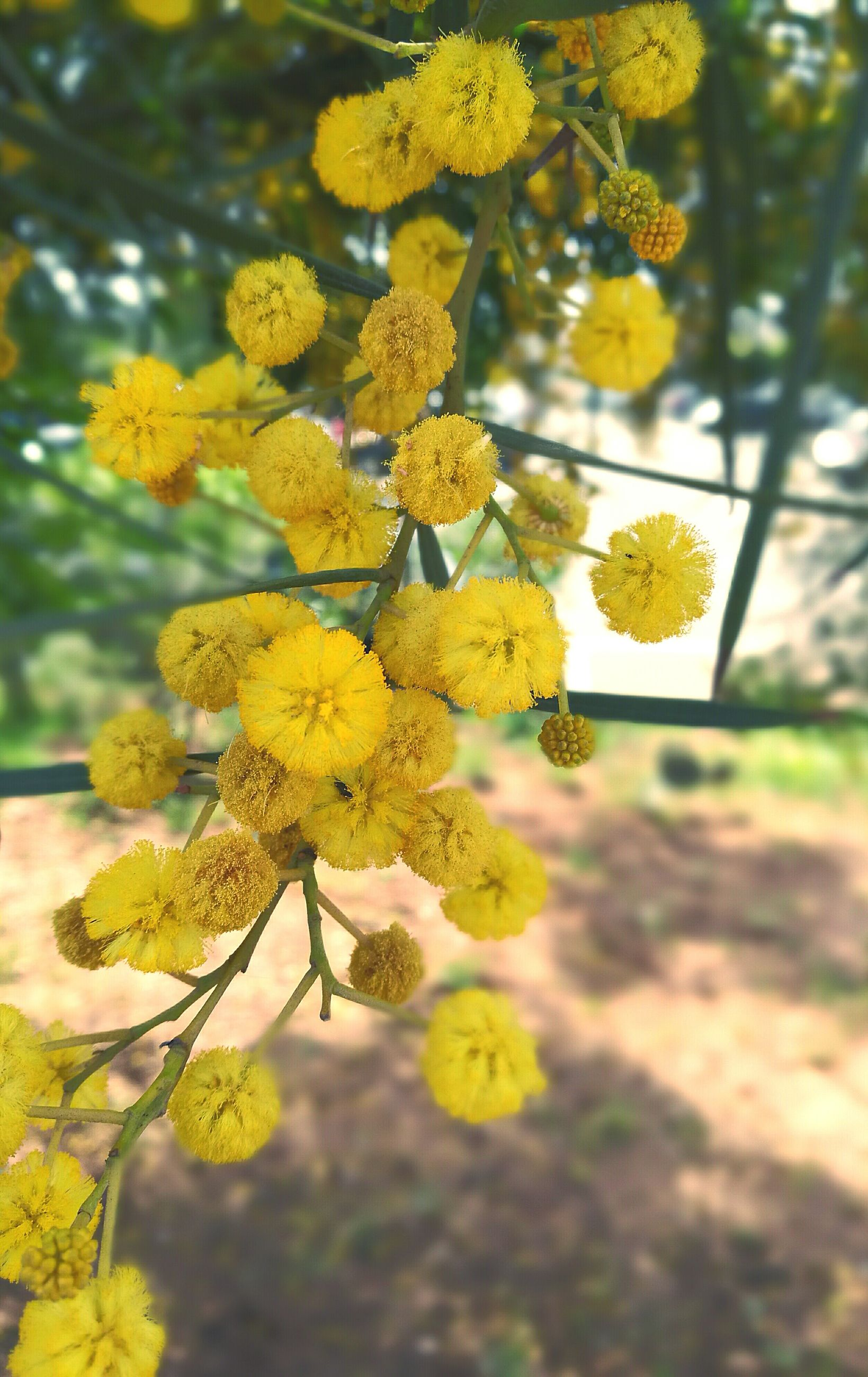 yellow, flower, growth, nature, no people, beauty in nature, close-up, outdoors, freshness, flower head, day, fragility