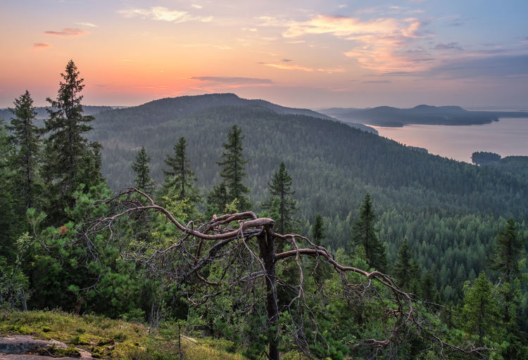 Scenic landscape with lake and sunset at evening in Koli, national park, Finland Beauty In Nature Sky Scenics - Nature Tranquil Scene Mountain Tranquility Sunset Plant Non-urban Scene Cloud - Sky Nature Environment Growth No People Landscape Mountain Range Outdoors Idyllic Forest Tree Summer Night Tranquility Finland National Park Lake Water Hill High Angle View Scenery Scenic Koli