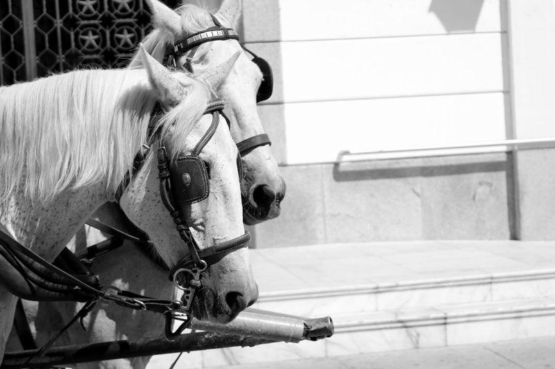 Horses against building