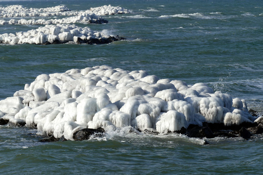 Frozen Ice Aquatic Mammal Beauty In Nature Floating On Water Motion Nature Outdoors Sea Swimming Water Waterfront Wave