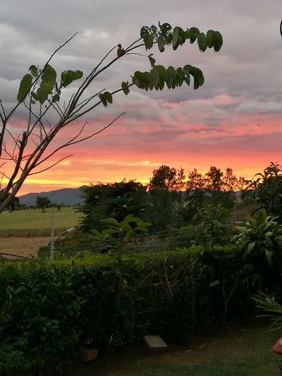 Sunset Fgugal Rural Scene