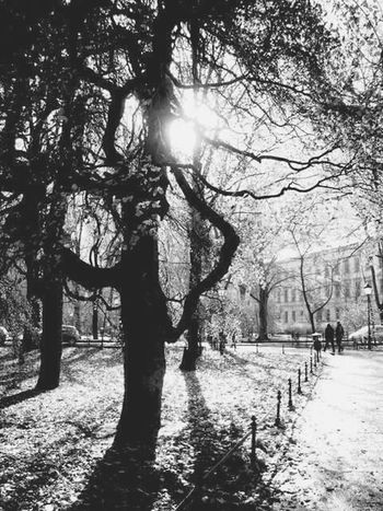 Planty Blackandwhite Blackandwhite Photography Park Spring Serenity Couple Pure Bliss Light And Shadow Lightandshadow Sunny Day