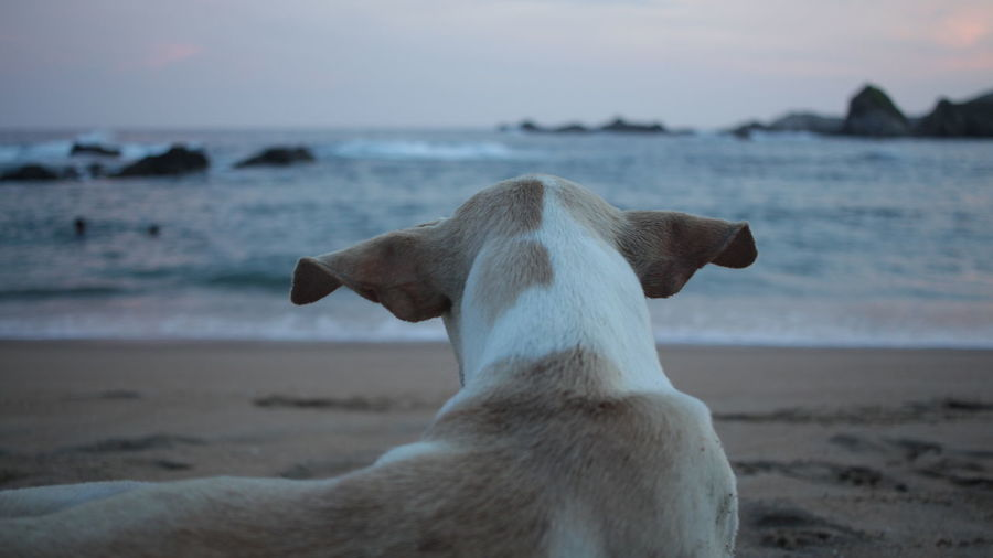beach dog with