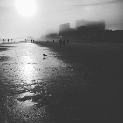 beachphotography Myrtle Beach SC Beautiful Nature Blackandwhite Black & White Beach Beach Life Sky_collection Sky And Clouds Clouds And Sky Birds Birds_collection Light And Shadow Creative Light And Shadow Fog