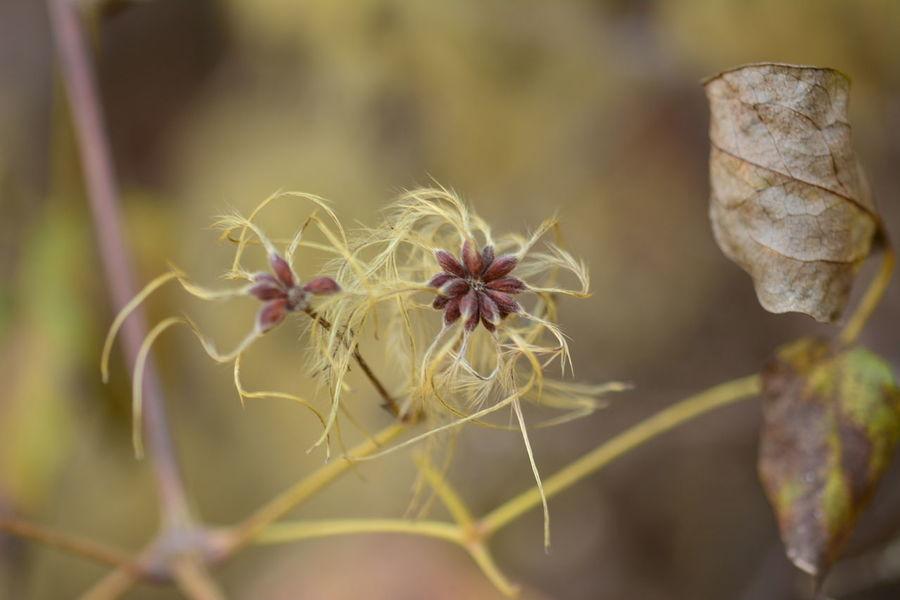 flor de invirno Macrophotography Naturephotography Flor Flower Flower Head