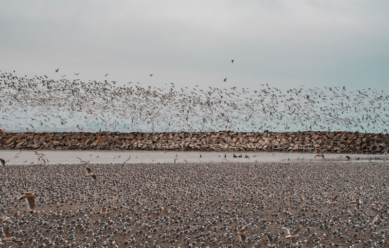 Water Beach Bird Large Group Of Animals Animals In The Wild Land Vertebrate Sky Sea Animal Nature Animal Wildlife Group Of Animals Day Tranquility Animal Themes Beauty In Nature No People Tranquil Scene Flock Of Birds Pebble Outdoors Horizon Over Water Gravel Seagull