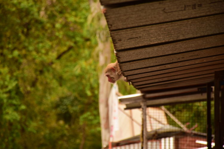 View of monkey on roof