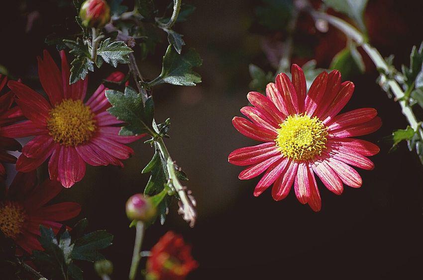 Flowers RAD Shoot Daylight