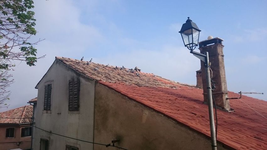 Pigeons Roof Lamp Sky Horizontal No People Outdoors Day