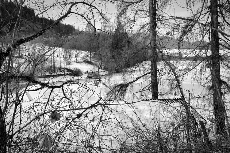 Nikon Nikonphotography Nikon D7100 Nature_collection Nature Photography Kraigersee Landscape_photography Kärnten Black & White Blackandwhite Blackandwhite Photography Schwarzweiß Landscape #Nature #photography Day Tree Outdoors Nature No People Branch Sky Mobility In Mega Cities Colour Your Horizn EyeEmNewHere