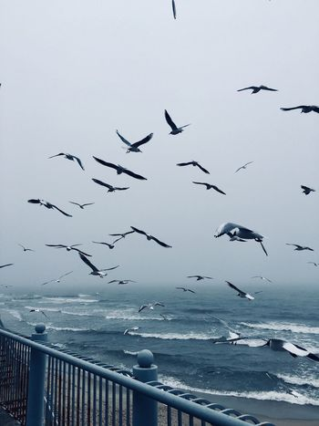 Fog Foggy Sky Horizon Over Water Day Seagull Beauty In Nature Outdoors Migrating Water Mid-air Spread Wings No People Animal Wildlife Nature Flock Of Birds Sea Animal Themes Large Group Of Animals Flying Animals In The Wild Bird Birds ShotOnIphone Baltic Sea