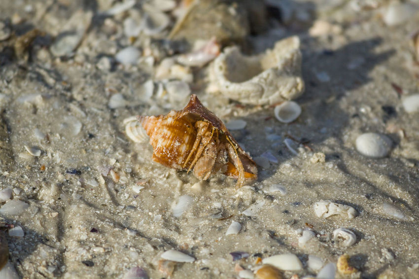 Beach Close-up Day Florida Nature Photography No People Outdoors Sand Shell