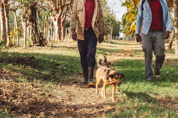 Full length of dog walking on field