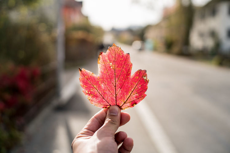 Cropped hand holding red leaf against road