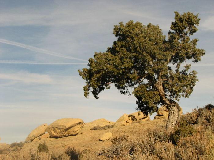 Tree And Sky Silouette & Sky Landscape_photography EyeEm Best Shots - Landscape Eyem Best Shot - My World EyeEm Best Shots Hello World