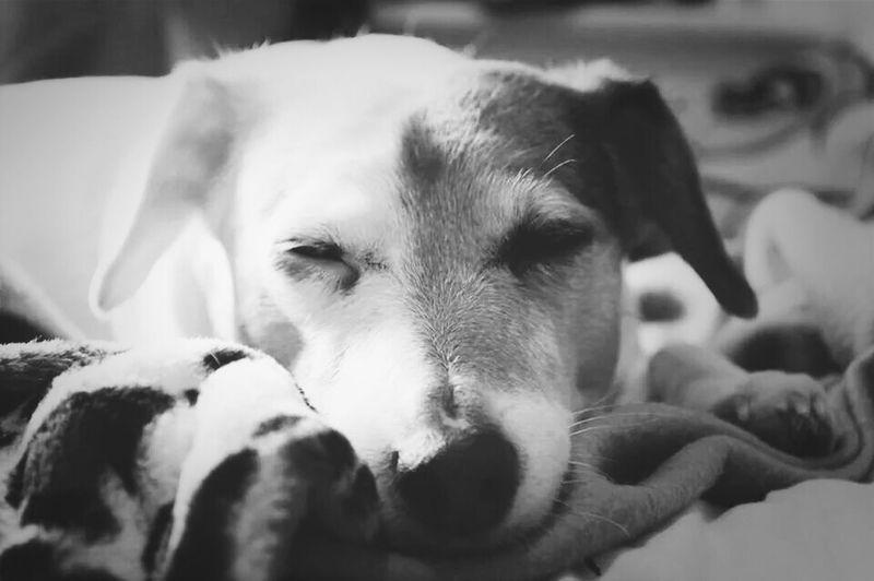 My beautiful doggy :3 Dogs Streamzoofamily Streamzoo Bnw_society