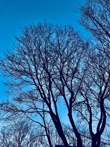 Tree filagree Plant Tree Sky Branch No People Nature Beauty In Nature Blue Silhouette Bare Tree Clear Sky Tranquility Dusk