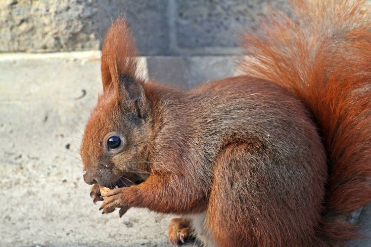 Mammal Animal Animal Themes One Animal Rodent No People Close-up Animals In The Wild Outdoors Squirrel Looking Animal Head