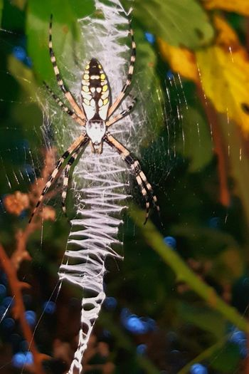 Spider Spider Web One Animal Survival Insect Animal Themes Animals In The Wild Web Animal Wildlife Animal Leg Nature No People Outdoors Trapped Day Full Length Fragility Close-up Water Weaver Spider Spiderweb Spider Macro Spider Silk Designs In Nature