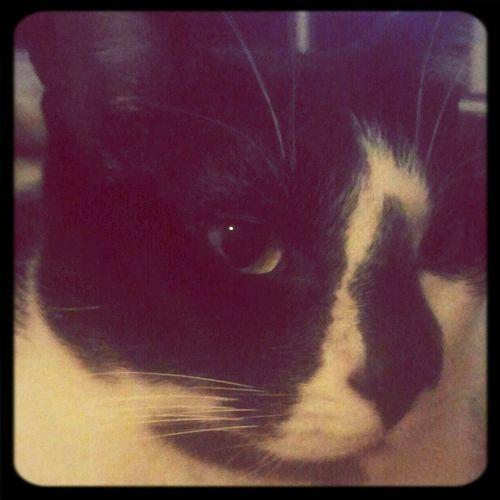 Mononoke, the cat :)