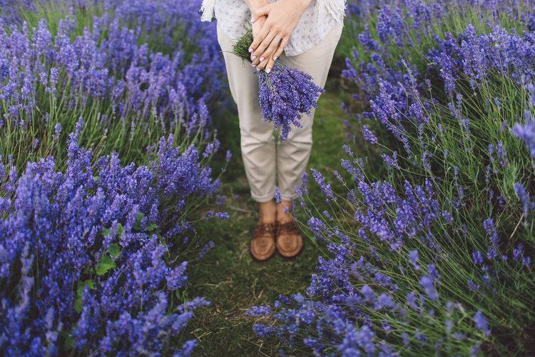 Beauty Beauty In Nature Blooming Casual Clothing Day Feet Flower Fragility Freshness Growth In Bloom Lavanda Lavande Lavander Lavander Flowers Lavanderfields Leisure Activity Lifestyles Nature Outdoors Petal Pink Color Plant Purple Out Of The Box