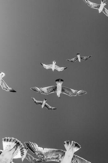 Close-up of flock of birds in sky