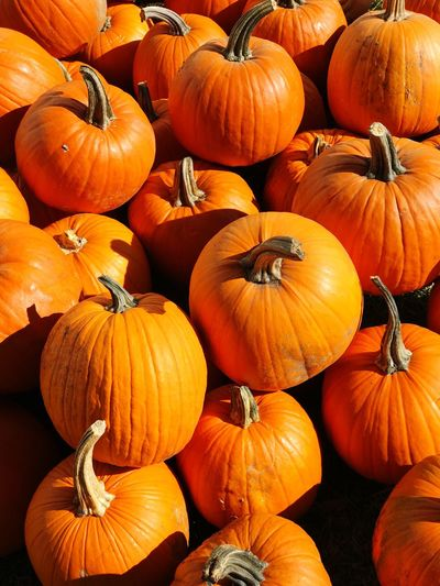 Pumpkins, Iowa Pumpkin Halloween Autumn Vegetable Orange Color Agriculture Squash - Vegetable Farm Freshness Pumpkin Seed Food No People Gourd Field Nature Holiday - Event Multi Colored Plant Market Day Thanksgiving fall