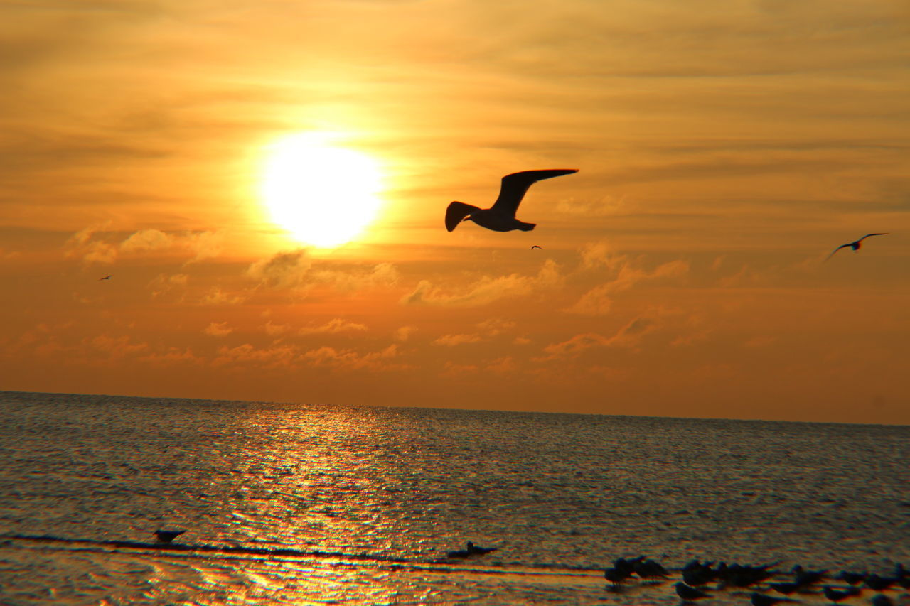 sunset, sea, bird, flying, nature, animal themes, animals in the wild, silhouette, horizon over water, beauty in nature, scenics, water, sky, animal wildlife, one animal, mid-air, spread wings, sun, outdoors, tranquil scene, seagull, no people, sea bird, cloud - sky, tranquility, day
