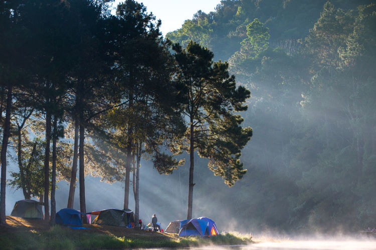 Men camping amidst trees and lake in forest