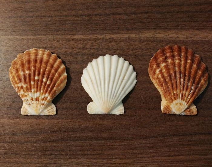 Underwater Ocean Seashell Shell Marine Life Marine Still Life Clam Scallop EyeEm Diversity
