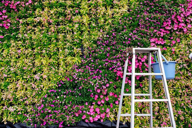 Pink flowering plants on field in yard