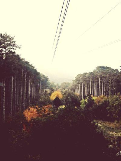 осень прекрасна 🌾🍂🍃 лес и природа канатнаядорога горы красотарядом