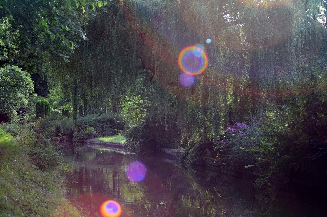 rainbow, bubble, tree, outdoors, nature, forest, no people, beauty in nature, day, bubble wand, spectrum