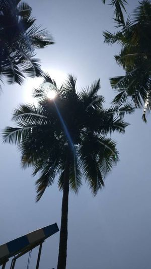 Tree Beauty In Nature No People Tranquility Vacations Freshness Low Angle View Sky Coconut Trees Summer Outdoors Day Noontime  Break The Mold EyeEmNewHere The Secret Spaces Viewpoint Art Is Everywhere Nature Travel Destinations Silhouette Palm Tree