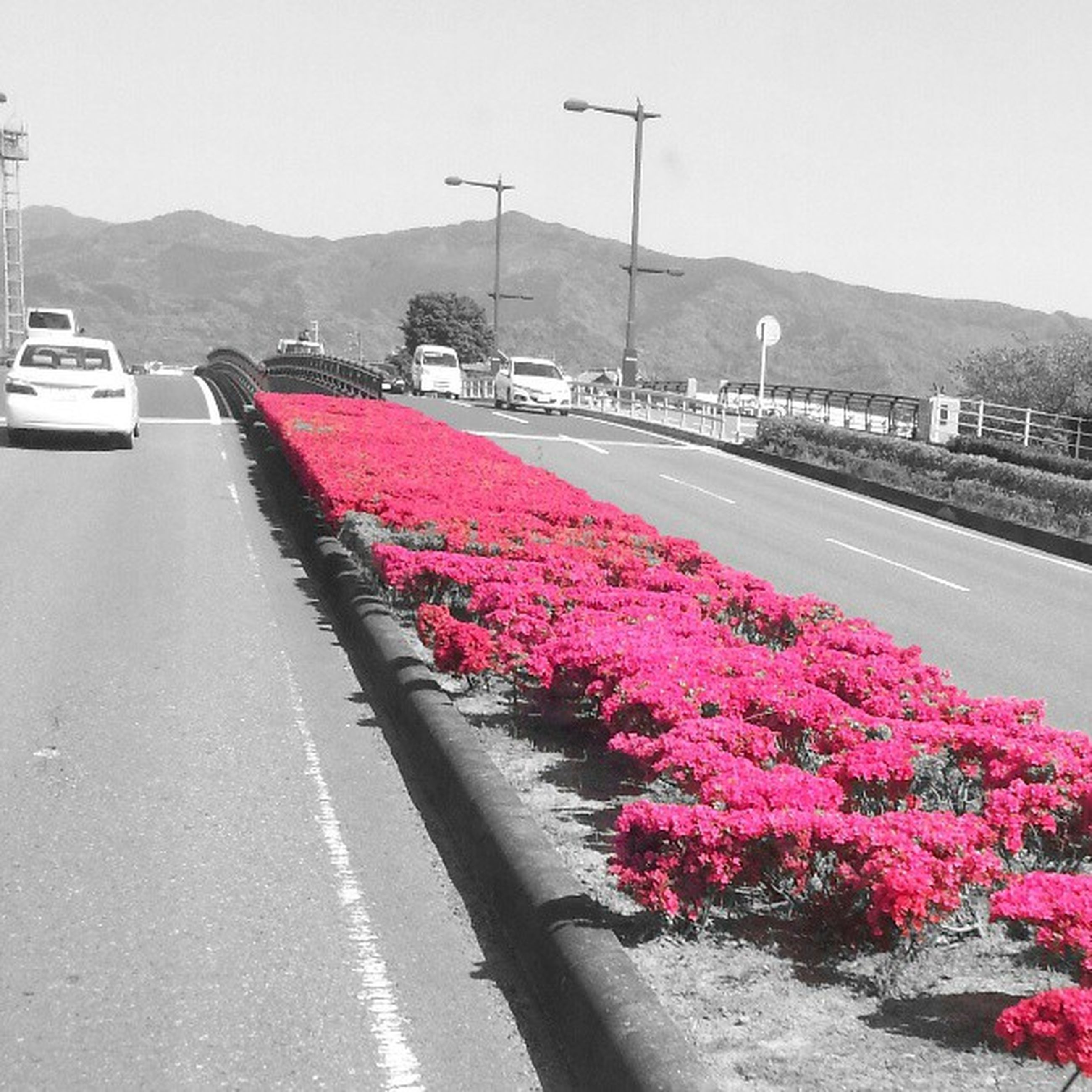 flower, transportation, road, car, land vehicle, mountain, mode of transport, sky, street, clear sky, the way forward, growth, plant, nature, freshness, beauty in nature, red, outdoors, road marking, day
